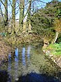 Stream south of the pond, Bishopstone, Swindon - geograph.org.uk - 355562.jpg