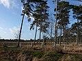 Strijbeekse Heide File71.jpg