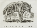 Striped Hyaena, Bewick, 1790.png
