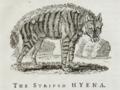 Striped Hyaena, Bewick, 1790.png