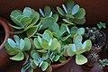 Succulent plant.JPG