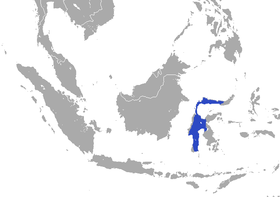 Sulawesi White-handed Shrew area.png