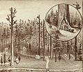 Summer Home scene - Thompson 1892.jpg