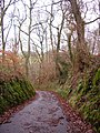 "Sunken road or ""hollow way"" - geograph.org.uk - 643913.jpg"