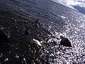 Swan - panoramio - Dmitrijs Purgalvis (1).jpg