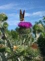 TS Метелик і бджола (18662351972).jpg