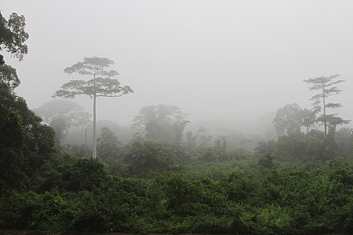 Taï National Park (24148248710)