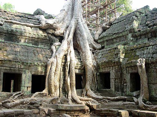 Ta Prohm Angkor1305