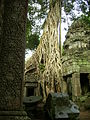 Ta Prom tree over the temple - Cambodia - panoramio.jpg