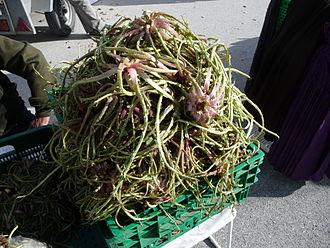 Scolymus hispanicus - Image: Tagarninas cortadas