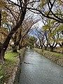 Tamagawa jousui 2019.12.1.jpg