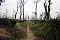 Tea Garden at Jaflong (3).jpg