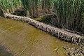 Technisch-biologische Ufersicherung an der Wümme, Versuchsstrecke 1 (50678703671).jpg