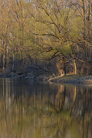 Thames River - London, Ontario 04.jpg