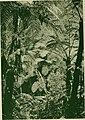 The American Museum journal (c1900-(1918)) (17537990284).jpg