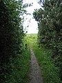 The Anglesey Coastal Path near Trwyn-du ^4 - geograph.org.uk - 489778.jpg