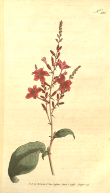 The Botanical Magazine, Plate 230 (Volume 7, 1794).png