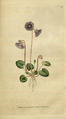 The Botanical Magazine, Plate 49 (Volume 2, 1788).png
