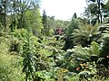 The Lost Gardens of Heligan - geograph.org.uk - 197945.jpg