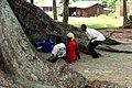 The Nakayima tree 01.jpg