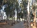 The National Park (Ramat Gan)025.jpg