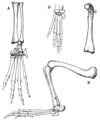 The Osteology of the Reptiles p192.png