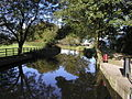 The Ripon Canal above the top lock.jpg