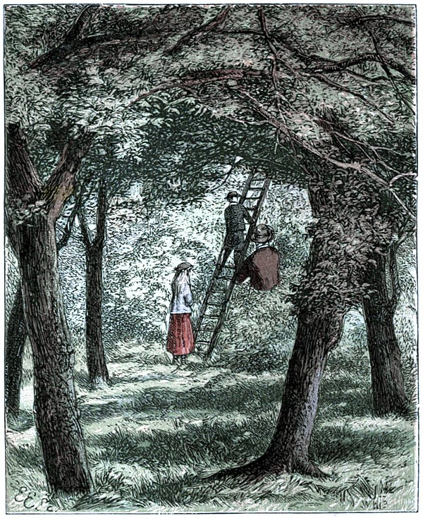 The Story of the Robins - Harriet and Frederick viewing the Robins' nest.jpg