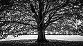 The Tree Avebury United Kingdom Black And White Photography (168704411).jpeg