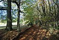 The Wealdway, Hurst Wood - geograph.org.uk - 1571697.jpg