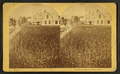 The Wheat Field, Bethlehem, N.H, from Robert N. Dennis collection of stereoscopic views.png