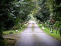 The western driveway to Pendley Manor - geograph.org.uk - 565720.jpg