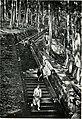Things seen in Japan (1911) (14783459853).jpg