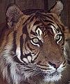 Tiger 3 (4872712984).jpg