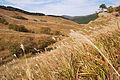 Tonomine highland Kamikawa Hyogo pref Japan10n.jpg
