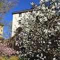Torkkelinmäen talo ja magnoliat.jpg