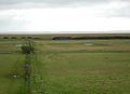 Tower Field, Caerlaverock - geograph.org.uk - 326031.jpg
