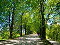 Tree-avenue-1639411.jpg