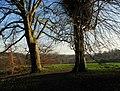 Trees, Barnetts Demesne - geograph.org.uk - 1116939.jpg