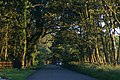 Trees at Formby Hall in late evening light. - geograph.org.uk - 509371.jpg