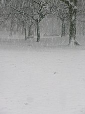 Trees in the snow - Whitworth Park, Moss Side, Manchester - panoramio.jpg