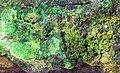 Trevorite-Népouite-536298.jpg