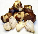 Collection of tulip bulbs, some sliced to show interior scales