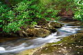 Twin-falls-creek-2 - West Virginia - ForestWander.jpg