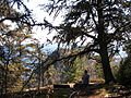 Under the Trees on Mount Josephine - panoramio.jpg