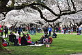 University of Washington Quad cherry blossoms 2014 - 12 (13347852885).jpg