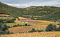 Vignes près du Pic de Vissou - October 2020.jpg