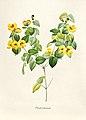 Vintage Flower illustration by Pierre-Joseph Redouté, digitally enhanced by rawpixel 66.jpg