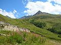 Vista dal Tour du Mont Blanc Val Ferret DSCN8814.JPG