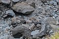 Volcanic rocks in the valley near Manganui Ski Area 03.jpg